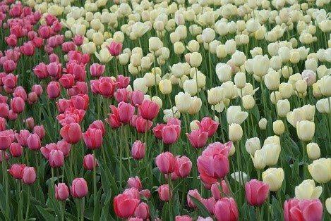 La primavera, el natural difusor de aromas que inspira fragancias artificiales